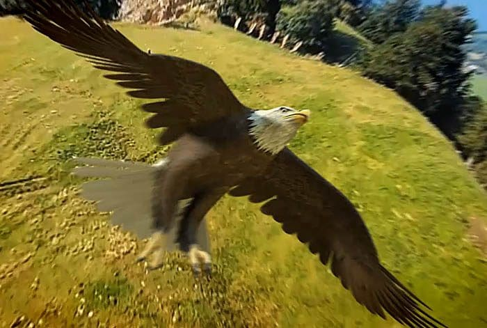 image 3D aigle pepsi expérience par Lagoon Studios animation 2D/3D et VFX