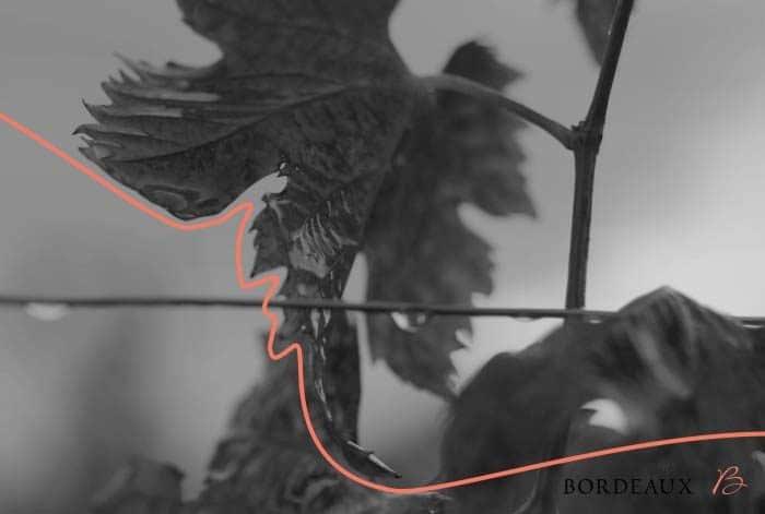 Motion design pour les vins de Bordeaux, suivez le fil. Lagoon Studios animation 2D & 3D