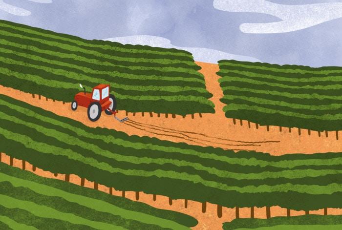 Chroniques vertes - animation 2D pour les vins de Bordeaux